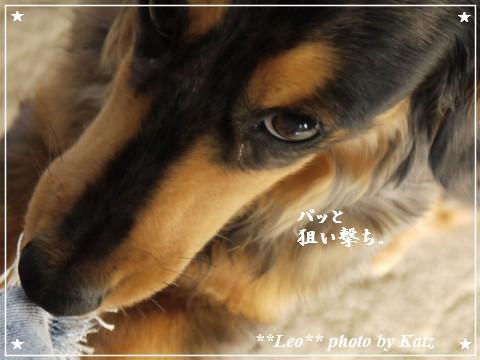 20110925 Leo (7)