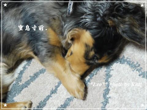 20110925 Leo(夜)