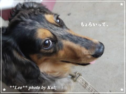 20110926 Leo夕散歩(6)