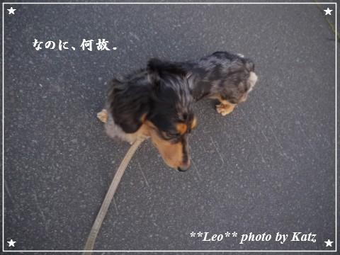 20110926 Leo夕散歩(4)