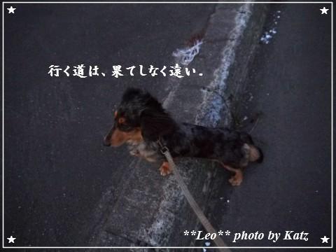 20110926 Leo夕散歩(2)