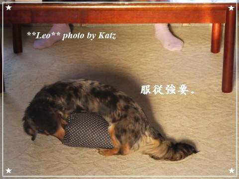 20110928 Leo (1)