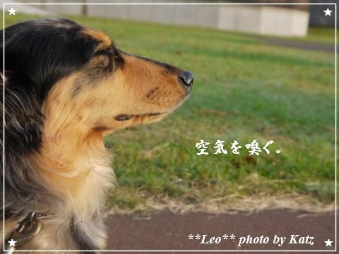 20110928 Leo (8)