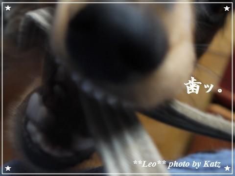 20110929 Leo (1)