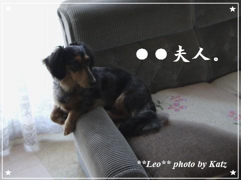 20110929 Leo (5)