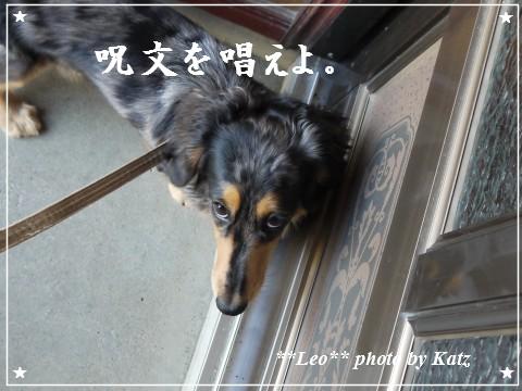 20110929 Leo (6)
