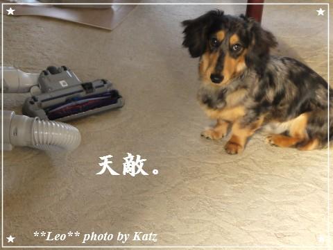 20110929 Leo (4)