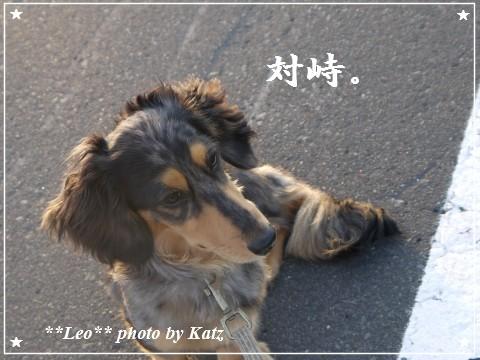 20110929 Leo (8)