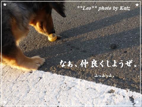 20111011 Leo (6)
