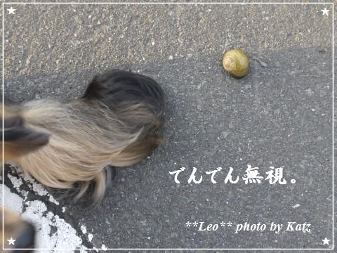 20111011 Leo (7)