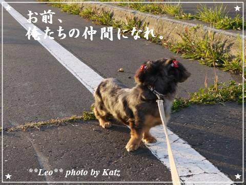 20111011 Leo (5)