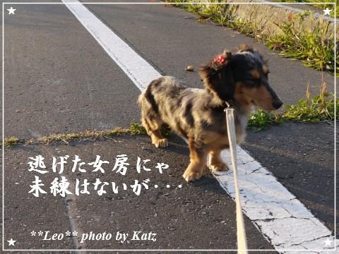 20111011 Leo (4)