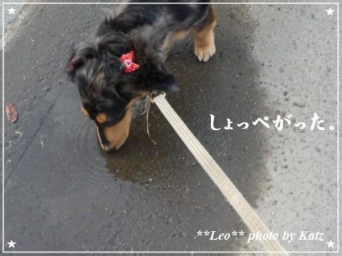 20111011 Leo (8)