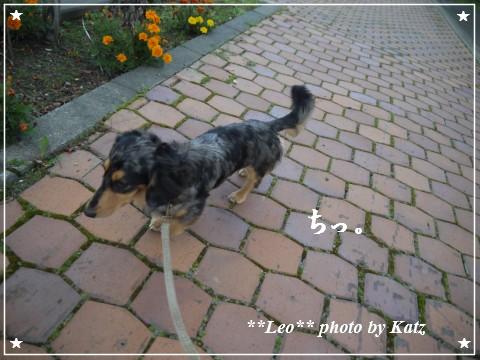 20111012 Leo (2)
