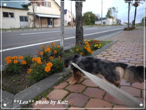 20111012 Leo (7)