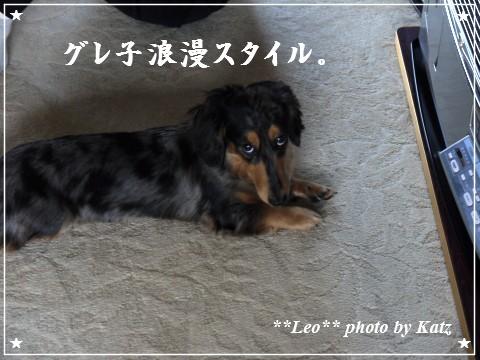 20111019 Leo (1)