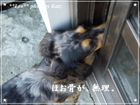 20111019 Leo (4)