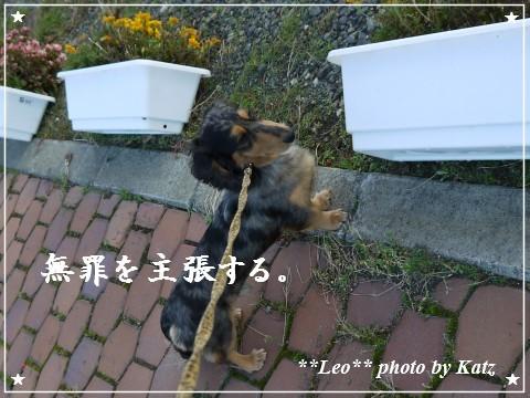 20111019 Leo (9)