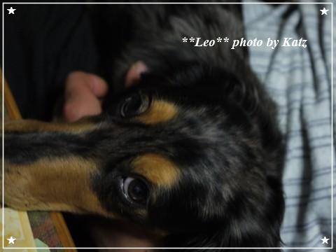 20111020 Leo (8)