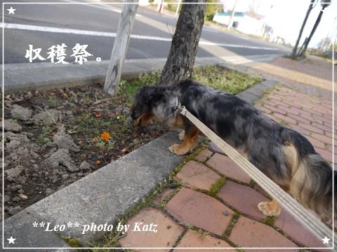20111022 Leo (1)