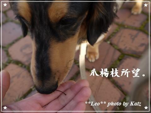 20111022 Leo (10)