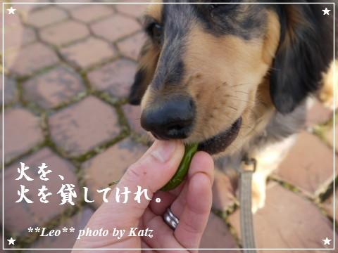 20111022 Leo (8)