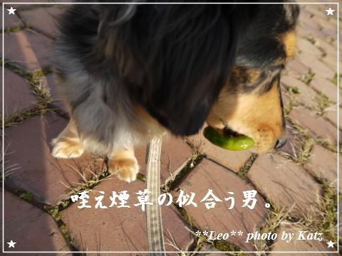 20111022 Leo (9)