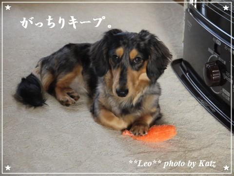 20111024 Leo (6)