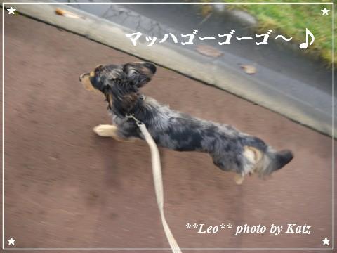 20111024 Leo (5)