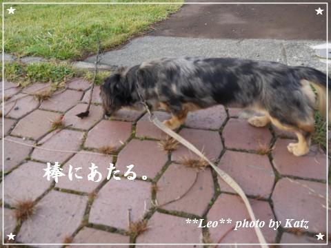 20111024 Leo (7)
