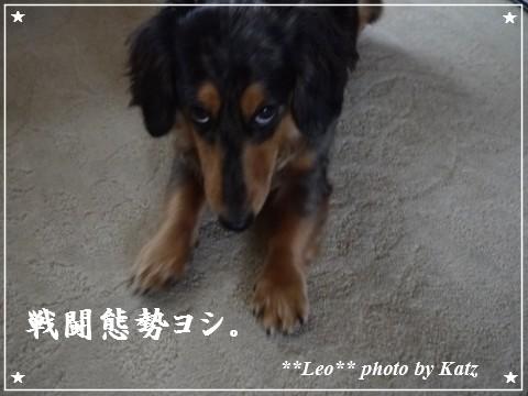 20111025 Leo (4)