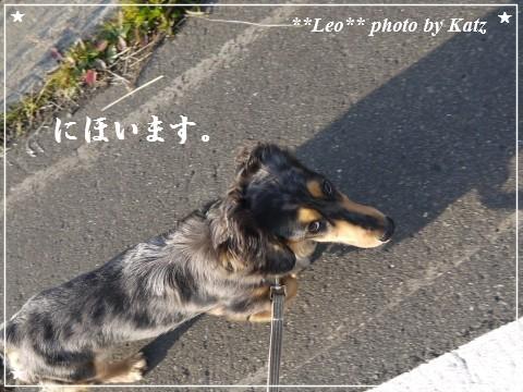 20111106 Leo (6)