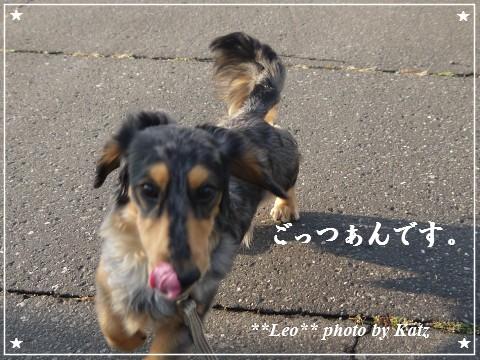 20111106 Leo (10)