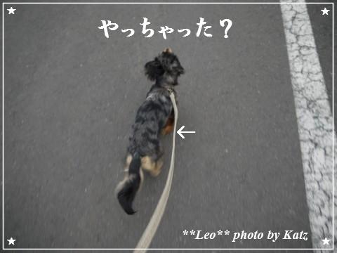 20111113 Leo (5)