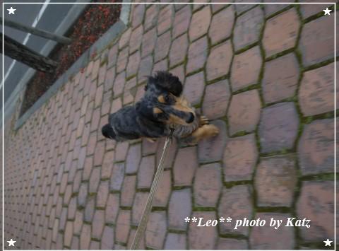20111113 Leo (2)