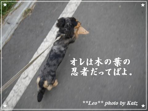 20111113 Leo (4)