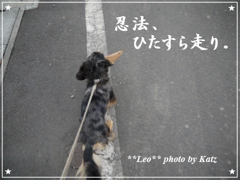 20111113 Leo (11)
