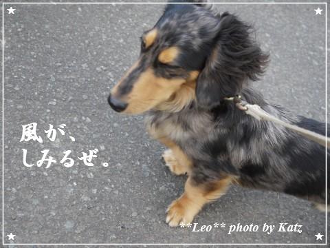 20111113 Leo (10)