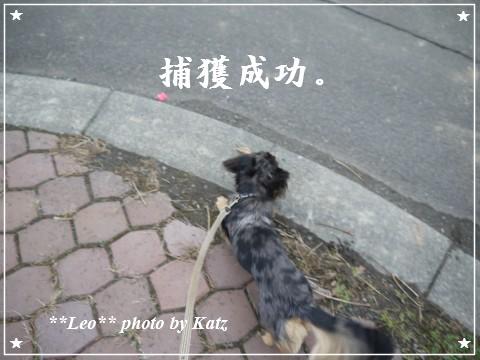 20111113 Leo (12)