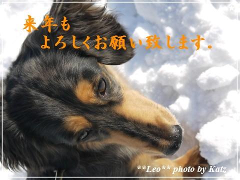 20111231 Leo (5)