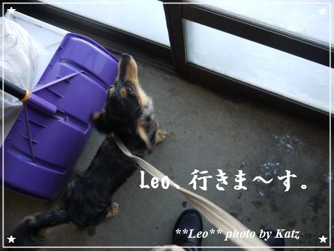 20111231 Leo (1)
