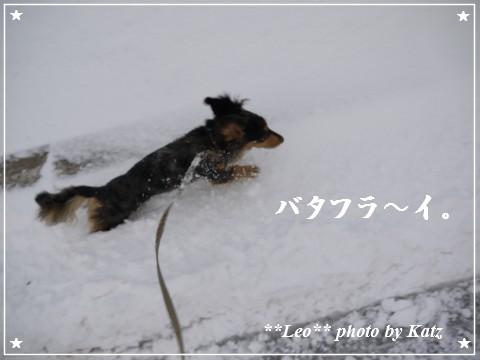20111123 Leo (5)