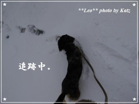 20111123 Leo (9)