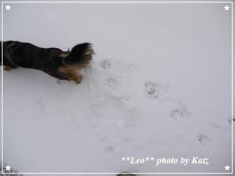 20111123 Leo (8)