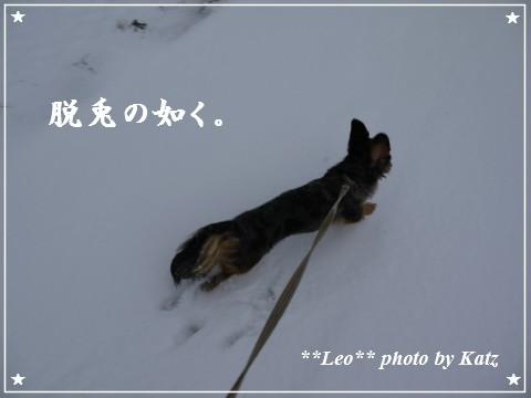 20111123 Leo (7)