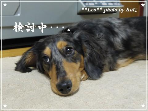 20111130 Leo (6)
