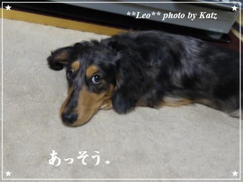 20111130 Leo (3)