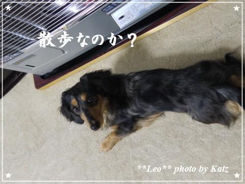20111130 Leo (2)