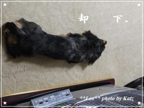 20111130 Leo (1)