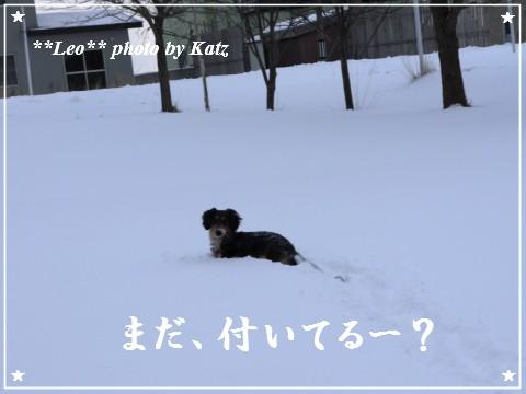 20111211 Leo (5)